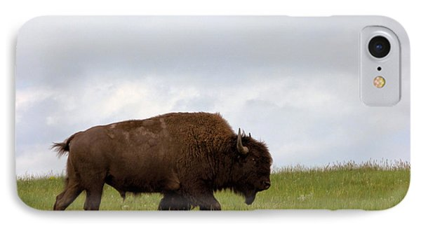 Bison On The American Prairie IPhone Case by Olivier Le Queinec