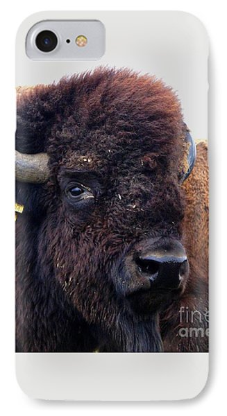 Bison Portrait IPhone Case