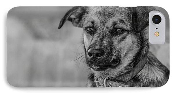 Black And White Dog Portrait IPhone Case by Daniel Precht