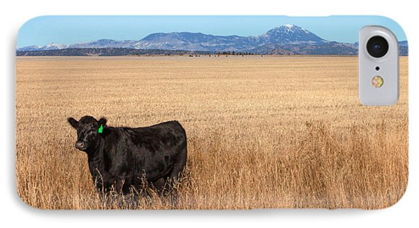 Black Angus Looking IPhone Case by Todd Klassy