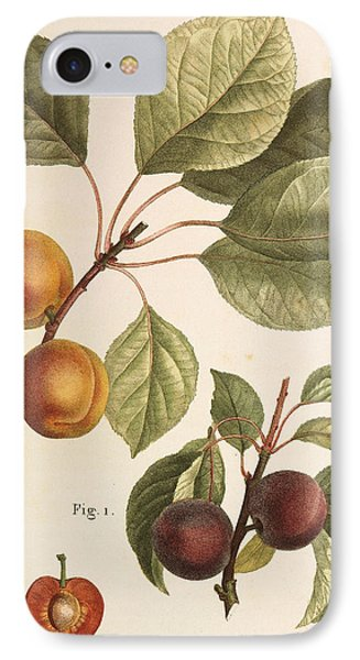 Black Apricot And Apricot Plants IPhone Case by Pierre Joseph Redoute