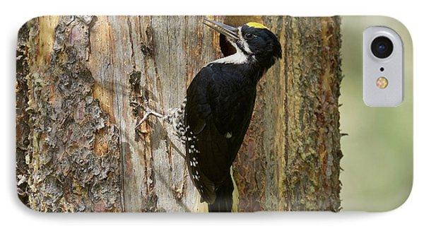 Black-backed Woodpecker Phone Case by Doug Herr