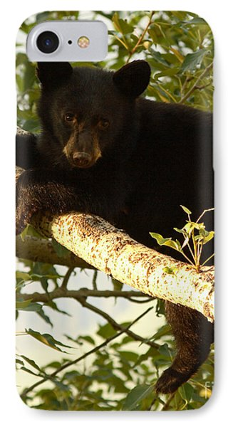 Black Bear Cub Resting On A Tree Branch IPhone Case by Max Allen