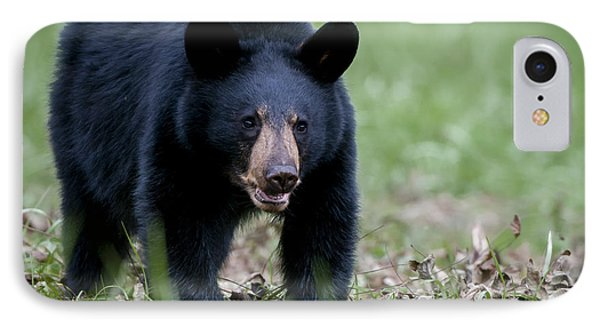 Black Bear IPhone Case by Tyson and Kathy Smith