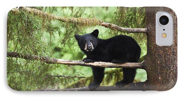 Black Bear Ursus Americanus Cub In Tree IPhone Case