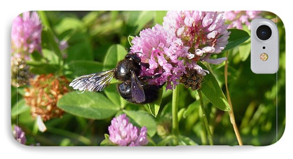 Black Bee On Small Purple Flower IPhone Case by Jean Bernard Roussilhe