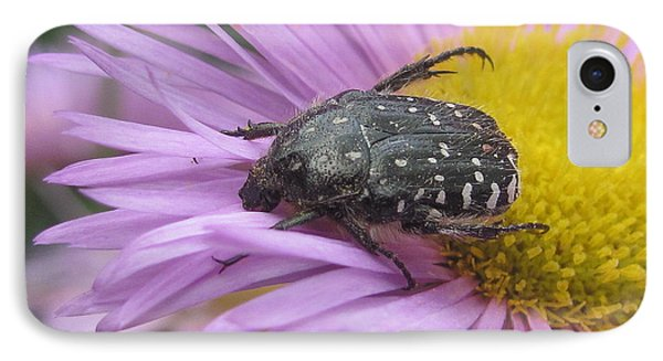 IPhone Case featuring the photograph Black Beetle by Irina Hays