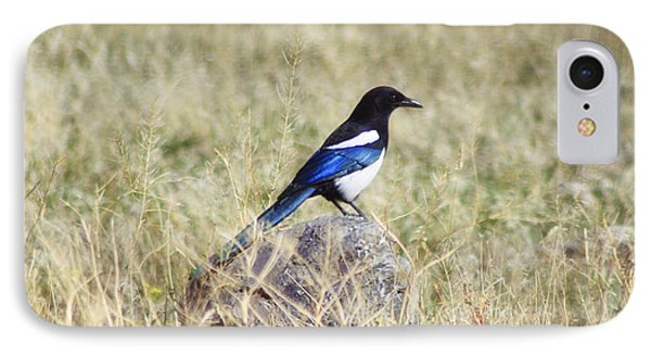 Black-billed Magpie IPhone Case by Janie Johnson