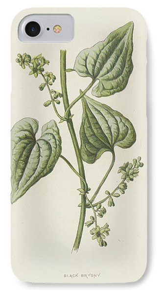 Black Bryony IPhone Case by Frederick Edward Hulme