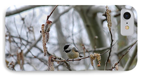 Black-capped Chickadee 20120321_38a IPhone Case by Tina Hopkins
