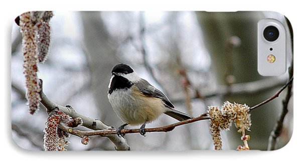 Black-capped Chickadee 20120321_39a IPhone Case by Tina Hopkins