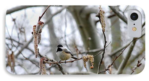 Black-capped Chickadee 20120321_39b IPhone Case by Tina Hopkins