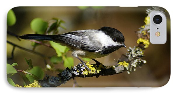 Black-capped Chickadee Phone Case by Ben Upham III