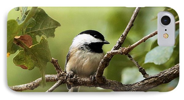 Black Capped Chickadee On Branch IPhone Case by Sheila Brown