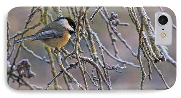 Black-capped Chickadee IPhone Case by Sean Griffin