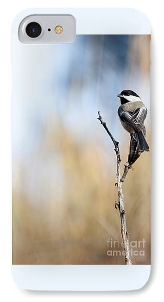 Black-capped Chickadee IPhone Case by Shevin Childers