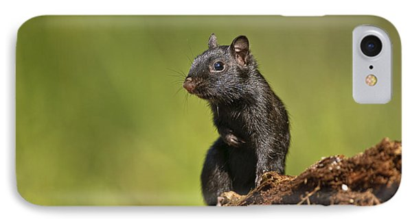 Black Chipmunk On Log IPhone Case