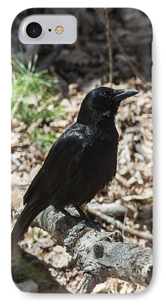 Black Crow In The Forest IPhone Case by John Haldane