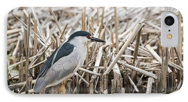 Black-crowned Night Heron 2017-1 IPhone Case by Thomas Young