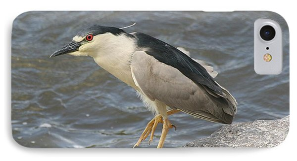 IPhone Case featuring the photograph Black-crowned Night Heron by Doris Potter