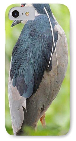 Black Crowned Night Heron IPhone Case by Todd Sherlock