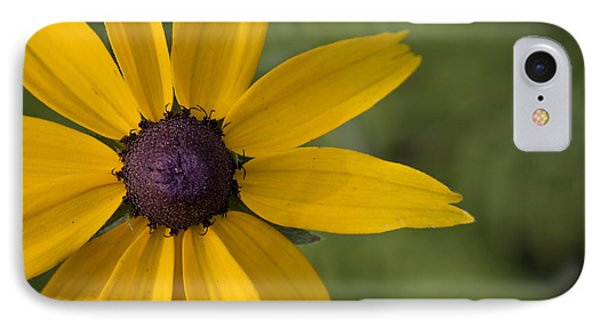 Black-eyed Susan IPhone Case by Bob Decker
