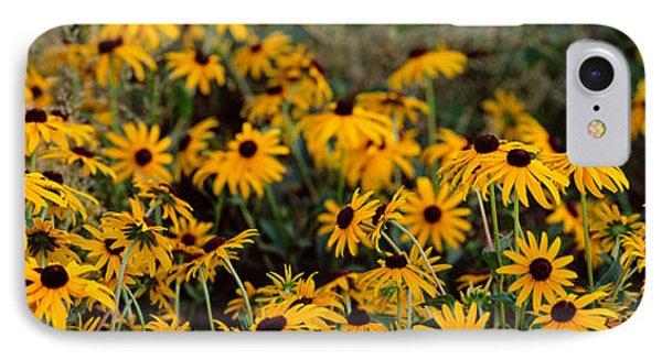 Black-eyed Susan Rudbeckia Hirta IPhone Case by Panoramic Images