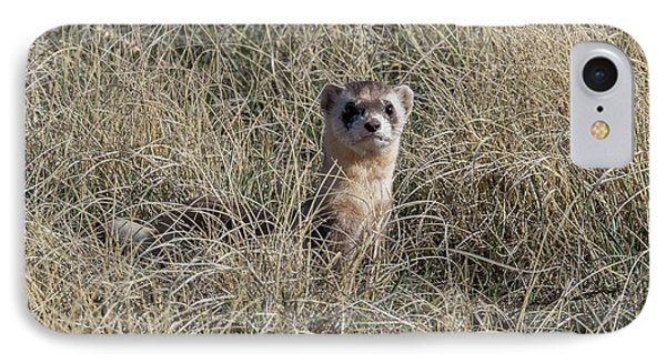 Black-footed Ferret Checks Out Its Surroundings IPhone Case