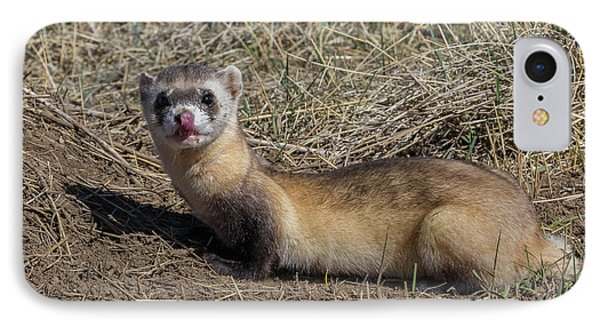 Black-footed Ferret Licks Its Chops IPhone Case