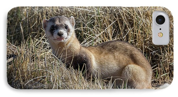 Black-footed Ferret Poses IPhone Case