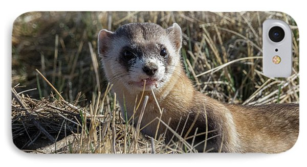 Black-footed Ferret Up Close IPhone Case