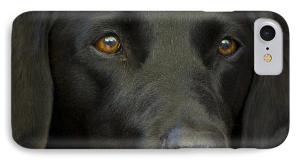 Black Labrador Dog Phone Case by Pixie Copley