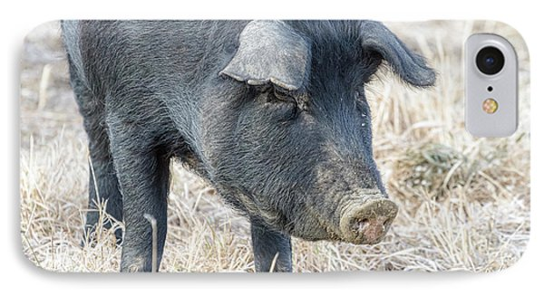 IPhone Case featuring the photograph Black Pig Close-up by James BO Insogna