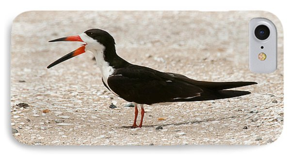 Black Skimmer On Assateague Island IPhone Case