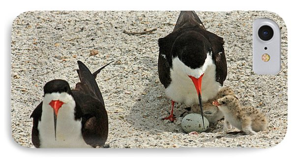 Black Skimmers And Babies IPhone Case by Terri Mills