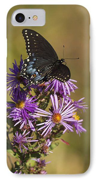 Black Swallowtail And Aster 2013-1  IPhone Case by Thomas Young