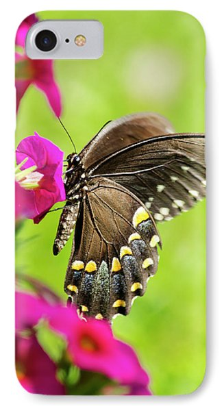 IPhone 7 Case featuring the photograph Black Swallowtail Butterfly by Christina Rollo