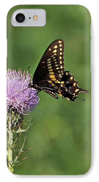 IPhone Case featuring the photograph Black Swallowtail Butterfly by Sandy Keeton