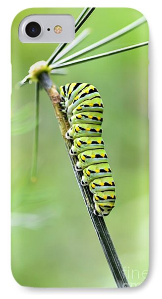 Black Swallowtail Caterpillar IPhone Case by Debbie Green