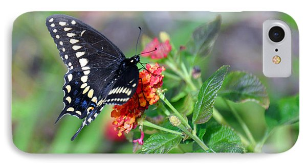 Black Swallowtail IPhone Case by Kay Lovingood