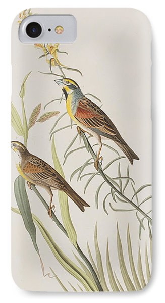 Bunting iPhone 7 Case - Black-throated Bunting by John James Audubon