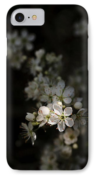 Blackthorn Flowers IPhone Case by David Isaacson