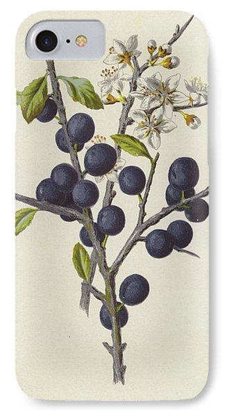 Blackthorn IPhone Case by Frederick Edward Hulme