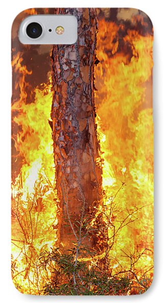 IPhone Case featuring the photograph Blazing Pine by Arthur Dodd