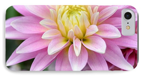 Blessings Dahlia IPhone Case