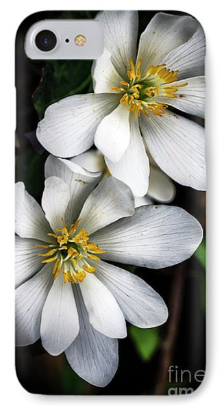 IPhone Case featuring the photograph Bloodroot In Bloom by Thomas R Fletcher
