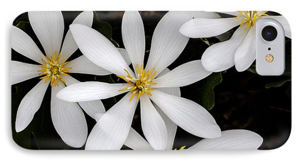 Sanguinaria IPhone Case by Skip Tribby