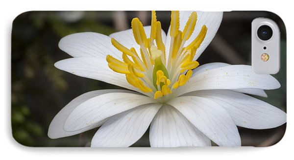 IPhone Case featuring the photograph Bloodroot by Tyson and Kathy Smith