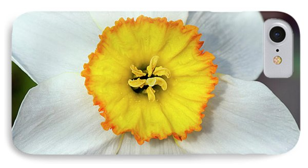 Bloom Of Narcissus IPhone Case by Michal Boubin