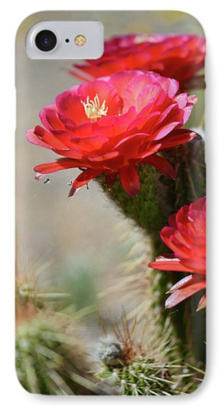 Bloomin' Cacti IPhone Case by Barbara Manis